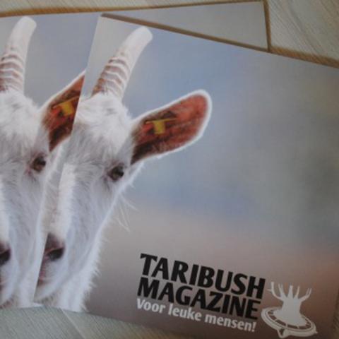 Taribush